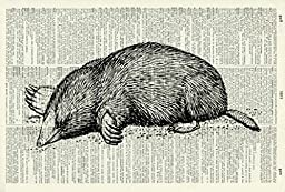 Mole ART PRINT - GIFT - Animal ART PRINT - VICTORIAN ART PRINT - Wildlife -VINTAGE ART - - Illustration - Picture - Vintage Dictionary Art Print - Wall Hanging - Home Décor - Book Print 65D