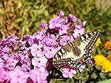 Stunning Butterfly Photos: Butterflies close up