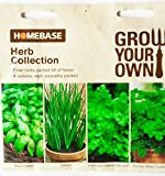 Homebase Herb Collection Seeds . Fresh herbs packed full of flavour , 4 varieties , each separately packed Basil sweet , Chives , Coriander Cilantro (for leaf) , Parsley Moss Curled