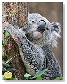 Koala Bear In A Tree Notebook - Photo of a koala bear hugging a tree provides the AWW effect for the cover of this blank unlined notebook.
