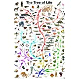 Evolution - The Tree of Life Poster