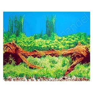 Aquarium Hintergrund mit 2