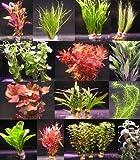 Wasserflora über 120 Aquarium-Pflanzen in 16 Bunde - großes buntes