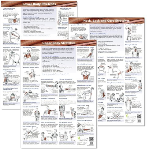 Anatomical Stretching Charts (set of 3) (Stretching Chart compare prices)