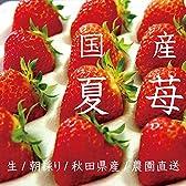 【6月~11月発送】 農園直送の夏イチゴ(秋田県産なつあかり) 2トレー 600g