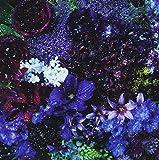 あなたに出会わなければ~夏雪冬花~/星屑ビーナス(初回生産限定盤)(DVD付)
