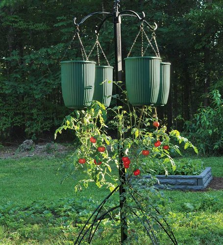 Hanging Tomato Planters A Look At Hanging Vegetable Planters