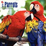 Parrots 2016 - Papageien - 18-Monatsk...