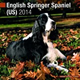 English Springer Spaniel (US) 2014