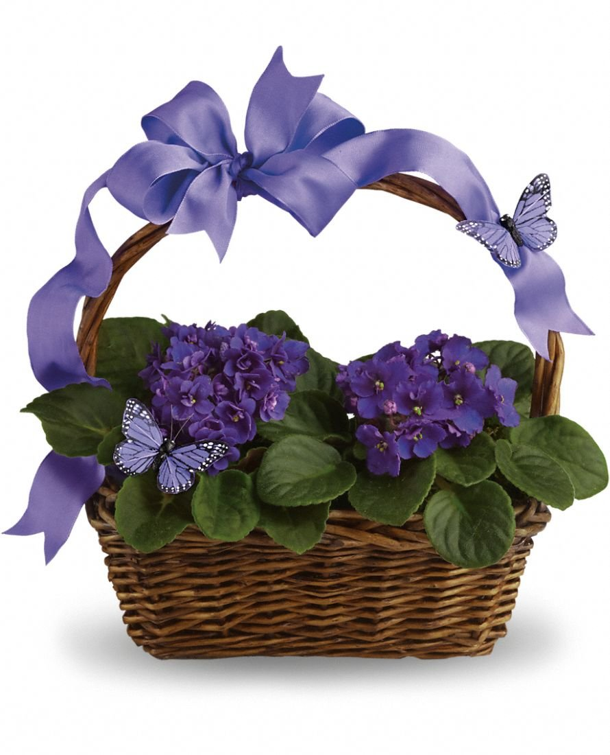 African Violet - Decorative Basket