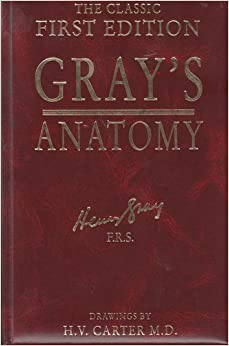 Grays Anatomy Review Pdf