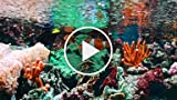 Costs of a Saltwater Reef Tank