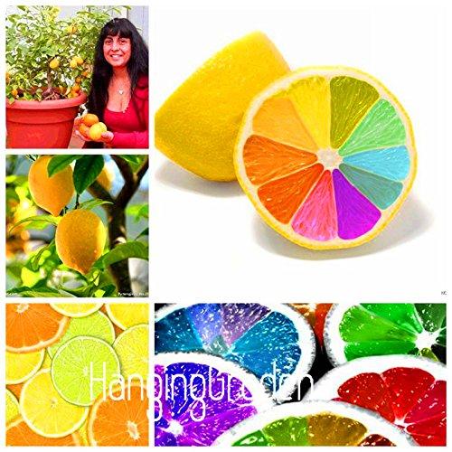 nuevas-semillas-2015-10-de-semillas-lot-semillas-arco-iris-de-limon-organico-raras-semillas-de-arbol