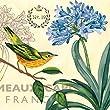 Portfolio Canvas Decor Jennifer Brinley \'Bird Garden Agapanthus\' 16x16 Framed Canvas Wall Art (Set of 2)