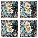Liili Square Coasters Turbinicarpus klinkerianus Natural Rubber Material Image 20977264820