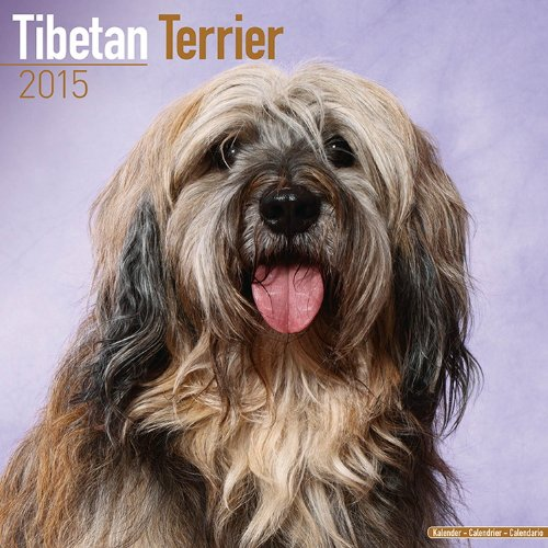 Tibetan Terrier Calendar - Just Tibetan Terrier Calendar - 2015 Wall calendars - Dog Calendars - Monthly Wall Calendar by Avonside