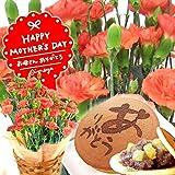 母の日ギフト 鉢花カーネーション 花とスイーツセット ギフトセット(オレンジ色の生花)