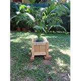 The Garden Store Square Wooden Planter Large