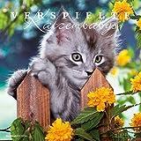 Verspielte Katzenbabys 2017 - Bildkalender