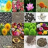alkarty sunflower,balsam,zinnia,portulaca,seeds