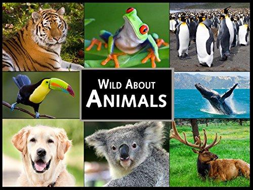 Season 10 Wild About Animals