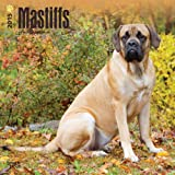 Mastiffs 2015 Calendar