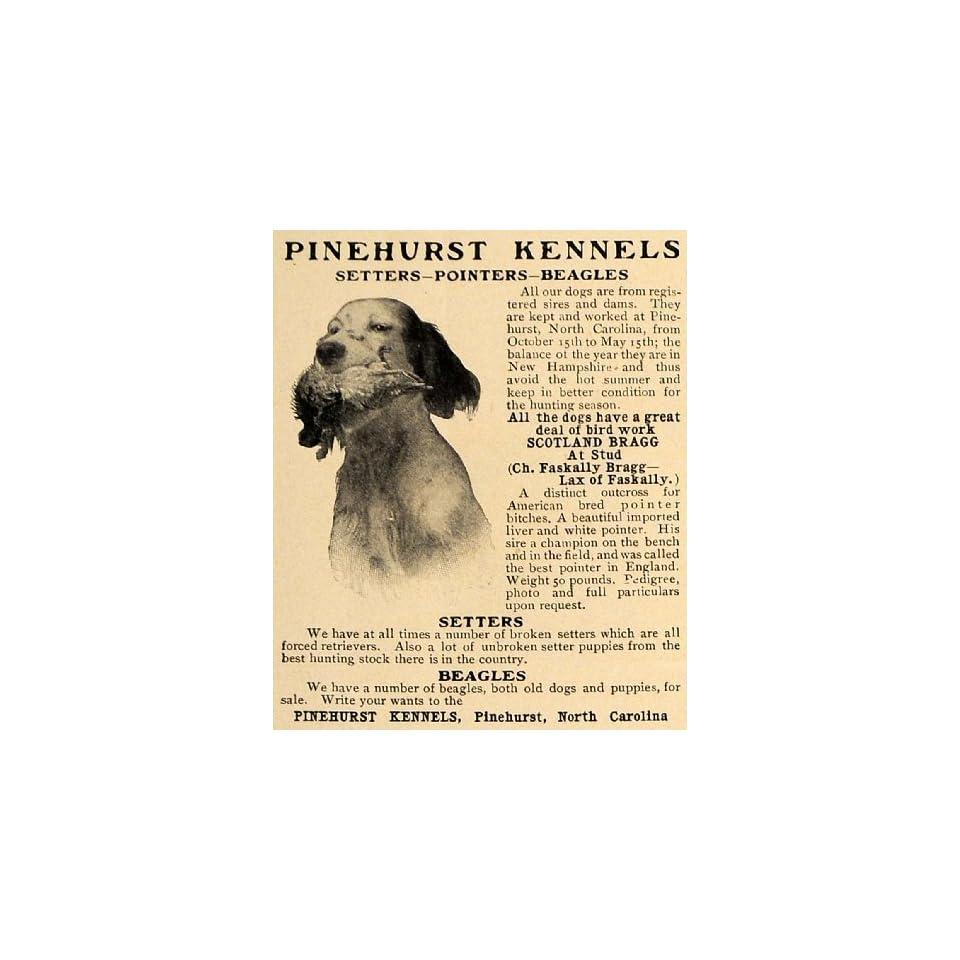 1906 Ad Pinehurst Kennel Setter Pointer Beagle Dog Hunt   Original Print Ad