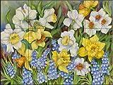 Daffodils and Grape Hyacinths by Joanne Porter Tile Mural for Kitchen Backsplash Bathroom Wall Tile Mural