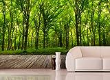 Fototapete Deep Forest in verschiedenen Größen - als...
