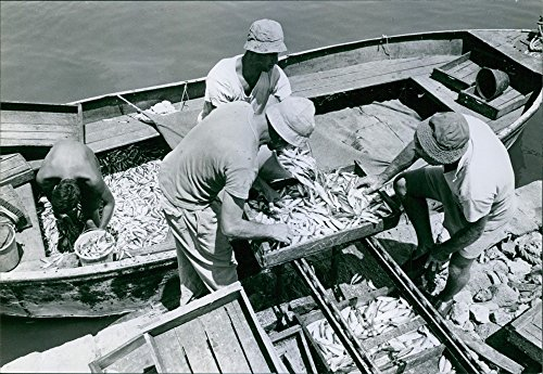 vintage-photo-of-fishermen-accumulating-fishes-in-boats-in-israel