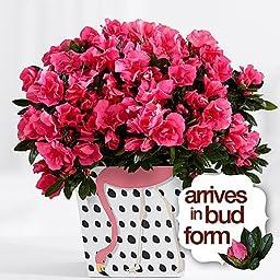 Green Fingers - Eshopclub Online Fresh Flowers Plants - Anniversary Flowers - Wedding Flowers Bouquets - Birthday Flowers - Send Flowers