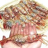 特大 子持ち ボタンエビ 1.0kg  お刺身用の高級海老 プチプチの卵が絶品 ランキングお取り寄せ