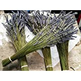 "Lavender Dried Premium Bundles - 160 - 180 Stems - 22"" - 24"" Long - (Pack of 2 Bundles)"