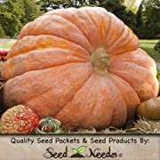 10 Seeds Pumpkin DILLS ATLANTIC GIANT (Cucurbita maxima) Seeds By Seed Needs