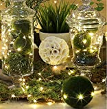 Solar Powered String Lights, BlueWind Environment Friendly 33ft 100 LEDs Copper Wire Starry Lights Ambiance Lighting for Outdoor, Gardens, Living Room, Party, Wedding