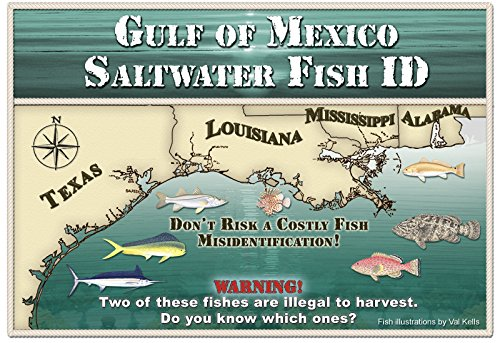 Gulf of mexico saltwater fish id for Louisiana saltwater fishing license