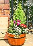 花由 春まで楽しめる 寄せ植え カントリーガーデン【11月6日以降のお届け】