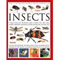 The Illustrated World Encyclopedia of Insects: A natural history and identification guide to beetles, flies, bees wasps, springtails, mayflies, stoneflies, dragonflies, damselflies, cockroaches, mantes, earwigs, stick and leaf insects, bristletails, dipteran, crickets, bugs, grasshoppers, fleas, spide