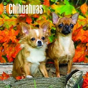 Chihuahuas - 2014 Calendar