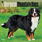 Bernese Mountain Dogs 2016 Square 12x...