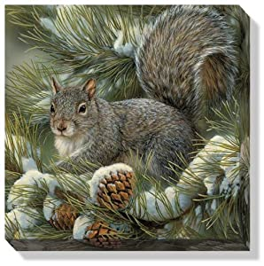 Gray Squirrel by Rosemary Millette Gallery Wrapped Canvas Print