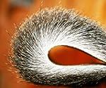 Fly Tying DEER HAIR - Winter Roe Deer...