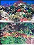61k3W2QKuZL. SL160  24 Double Sided Aquarium Background