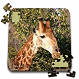 Angelique Cajam Safari Giraffes - South African Giraffe headface - 10x10 Inch Puzzle (pzl_20122_2)