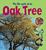 Ruth Thomson Learning About Life Cycles: The Life Cycle of an Oak Tree