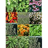 David's Garden Seeds Herb Medicinal Seed Collection HSM876 (Multi) 6000 plus Seeds (Open Pollinated, Organic)