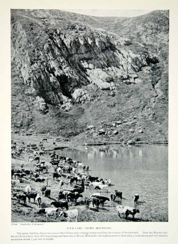 1925 Print Club Lake Snowy Mountains New South Wales Australia Landscape Cattle - Original Halftone Print front-1059431