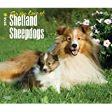 For the Love of Shetland Sheepdogs 2014 18-Month Calendar (Multilingual Edition)