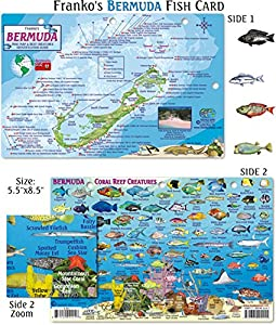 Bermuda Fish ID for Scuba Divers and Snorkelers
