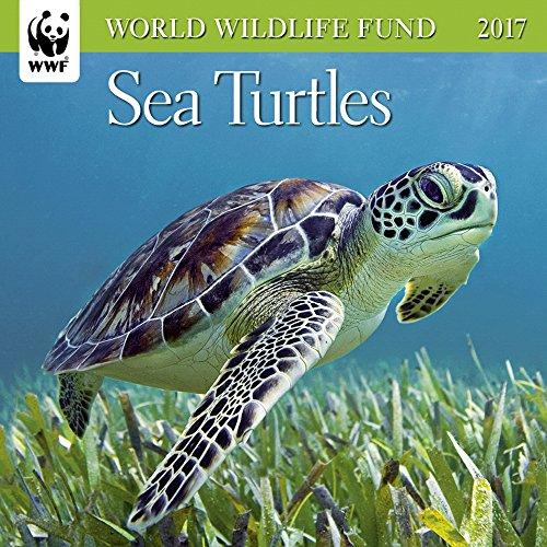 Sea Turtles WWF Mini Wall Calendar 2017